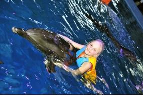 Одне коло з дельфінами у воді + фото (А4)