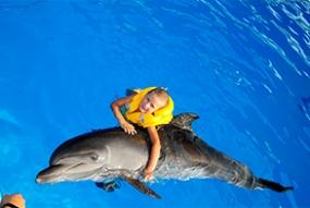 Плавання з дельфінами + фото у подарунок (10/15) 5хв